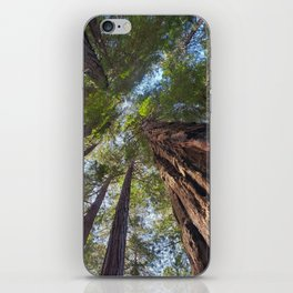 Muir Woods Tranquility  #2 iPhone Skin