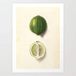 Vintage Illustration of a Lime Art Print