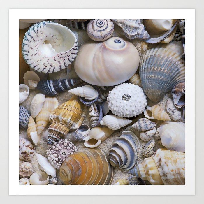 Sea Shell Collection Kunstdrucke
