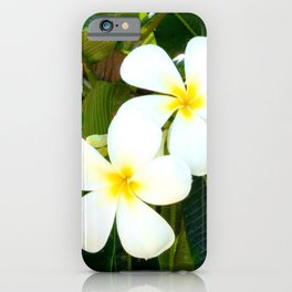 Fresh, Tropical Plumeria Flowers in the Hawaiian Islands iPhone Case