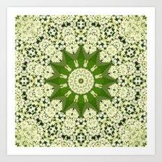 Elderflower mandala Art Print