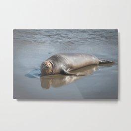 Pacific Seal Metal Print