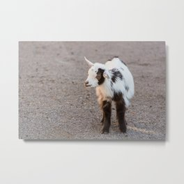 Living Treasures Animal Park - Baby Goat Metal Print