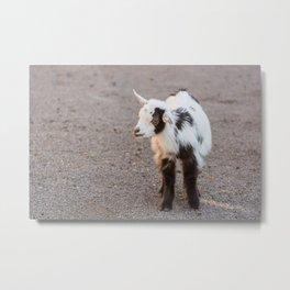 Living Treasures Animal Park - Baby Goat Metal Print
