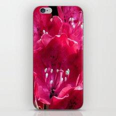 Red Azalia iPhone & iPod Skin