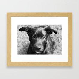 Labrador mix puppy Framed Art Print