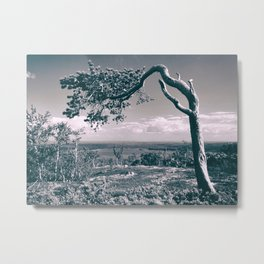 PIne in the mountains Metal Print