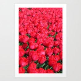 Carpet of Crimson Tulips Art Print