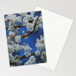 Sakura, cherry white blossom with blue background in Paris - Fine Arts Travel Photography Stationery Cards