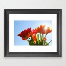 Tulip Flare Framed Art Print