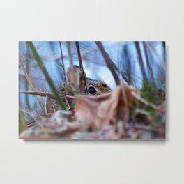 Hiding Rabbit Metal Print