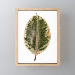 RUBBER FIG - HOUSE PLANT / KANYO-SHOKUBUTSU Framed Mini Art Print