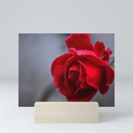 Rose Blossom Bloom Mini Art Print