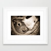 guinea pig Framed Art Prints featuring Guinea Pig Love by Sara H.