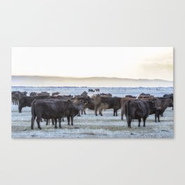 Good Morning Cows Canvas Print