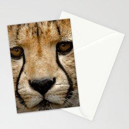 Big Cats Cheetah Stationery Cards
