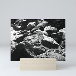 Seagull on Rocks Mini Art Print