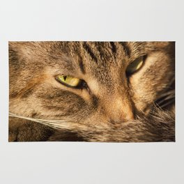 Sly cat Rug