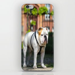 No Entry - Bulldog #decor #homedecor iPhone Skin