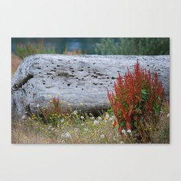 A place to be... Canvas Print