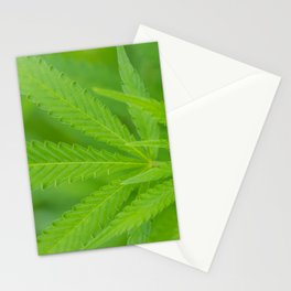 A Young Bud Stationery Cards