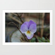 Little purple beauty Art Print