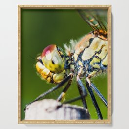 Beautiful colorful dragonfly extreme macro insect resting on dried bamboo stick in summer Serving Tray