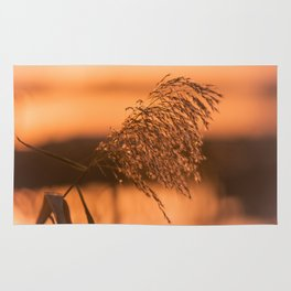 Nature impressions in the reed Rug