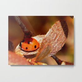 Winter ladybug Metal Print
