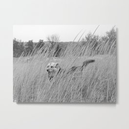 Dog In Beach Grass, Black and White Metal Print