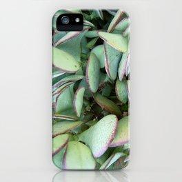 Silver Dollar Succulent  iPhone Case
