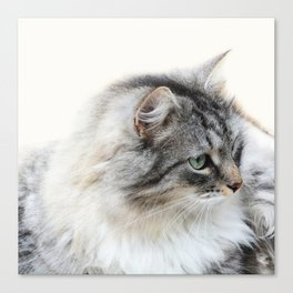 Silver Cat Canvas Print