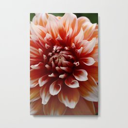 Cognac-Colored Dahlia Metal Print