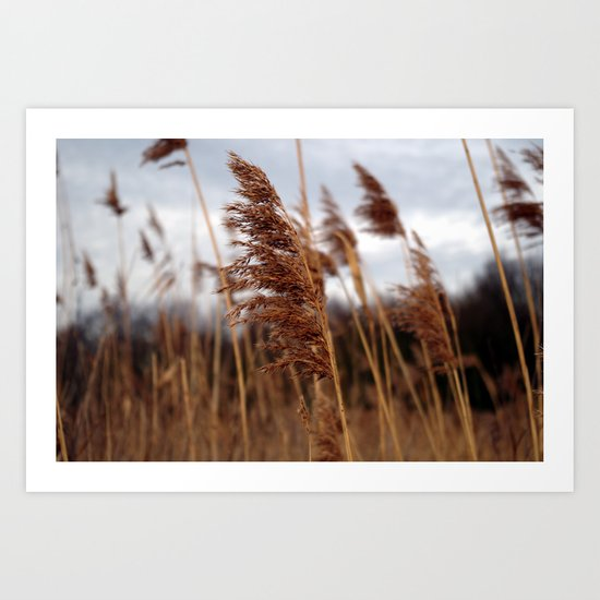 stay in the wind. Art Print