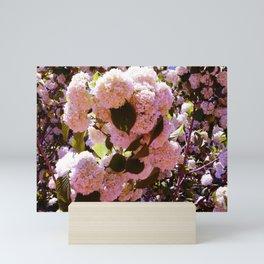 Pink Snowballs Mini Art Print