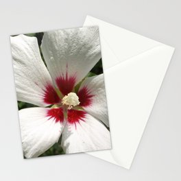 Hibiscus, White Stationery Cards