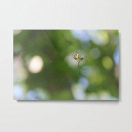 Spider on Web Metal Print