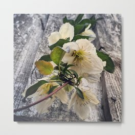 Beautiful White Clematis Flowers Hanging Over a Fence Metal Print