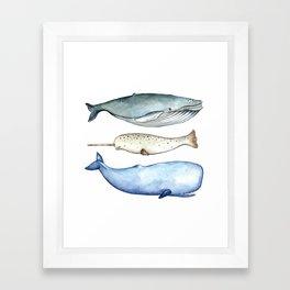S'whale Framed Art Print
