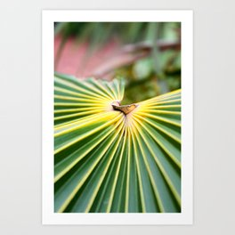 Cayman Islands II Art Print