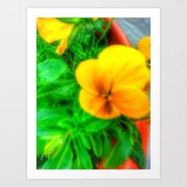 Yellow Viola Art Print