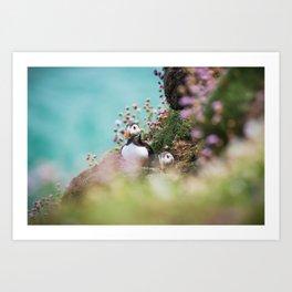 RR(288) Puffins Art Print