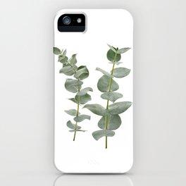 Eucalyptus Branches II iPhone Case
