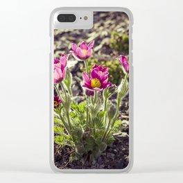 Pulsatilla vulgaris in garden Clear iPhone Case