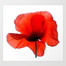 Simply Red - Poppy Flower on White Art Print