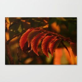 Fall Fire Canvas Print
