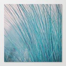 blue reed Canvas Print