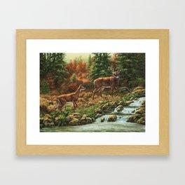Whitetil Deer Doe & Buck by Waterfall Framed Art Print