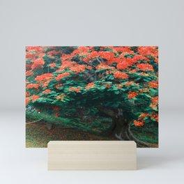 Tropical Flamboyant Tree USVI Mini Art Print