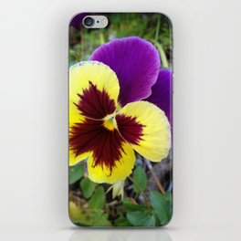 Garden Flower - Pansy 2014 iPhone Skin